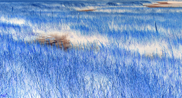 salt-marsh-at-carrabelle_invertedB